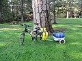My bike near ponderosa pine for scale (7967324794).jpg