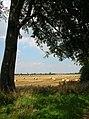 Myton Moor - geograph.org.uk - 525792.jpg