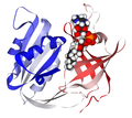 NADH cytochrome B5 reductase 1UMK.png