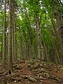 NPR Starý hrad, les.jpg