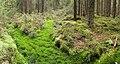 Nastola - forest 4.jpg