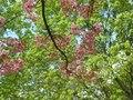 File:Natura Flora Video original Author Ladislav Kopunec Univerzon 11.04.2014 Art Law - Czech Republic.webm