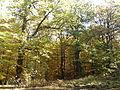 Nature reserve Dęby w Meszczach 12.19.jpg