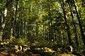Nature reserve Ptaci stena in autumn 2011 (32).JPG