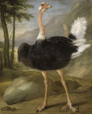 Nicasius Bernaerts - Study of an ostrich