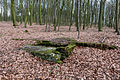 Nottuln, Lager Herbstwald -- 2016 -- 1474.jpg