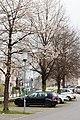 Oberndorf - Stadt - Motiv - 2021 04 18-3.jpg