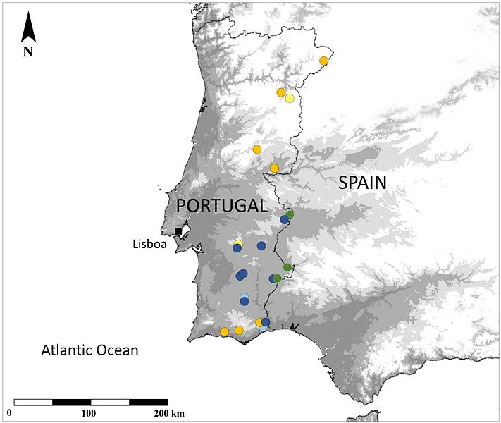 File:Occurence map of mantid species in Portugal.jpg