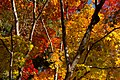 Ohara 2008-11-26 (3261976182).jpg