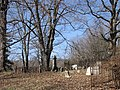 Old Coney Cemetery (3380760472).jpg