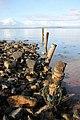 Old mooring posts at Sannox - geograph.org.uk - 811651.jpg