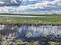 Olmanskie swamps in Belarus - May 2021 04.jpg
