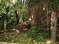 Opotiki Burial Tree.jpg
