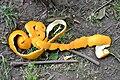 Orange peels-02.jpg