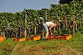 Ossingen - Wümmete 2011-09-26 13-35-52.JPG
