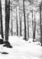 PSM V56 D0382 The silent winter woods.png