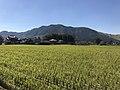 Paddy fields near Akamizu Station 2.jpg