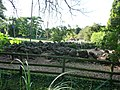 Paignton , Paignton Zoo, Peccaries - geograph.org.uk - 1484871.jpg