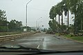 Palm fronds and tree limbs on Railway Avenue in Townsville.jpg