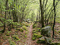 Paranesti forest.jpg