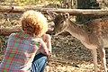 """Parcul de Animale - """"Moara de Vant"""" (8110128425).jpg"""