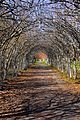 Parken vid Ängsö slott.jpg
