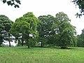 Parkland, Kirknewton - geograph.org.uk - 33340.jpg