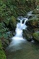 Parque da Cabreia - Portugal (3420318881).jpg