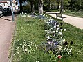 Parterre Fleurs Parc Hôtel Ville - Fontenay-sous-Bois (FR94) - 2021-04-24 - 2.jpg