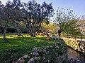 Pastoreio na Ribeira das Vinhas, Cascais. 03-18 (02).jpg