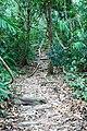 Path2Yaxchilan.JPG