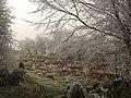 Path at Ffridd Faldwyn - geograph.org.uk - 1115127.jpg