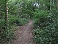 Path through Pimms Wood - geograph.org.uk - 1436215.jpg