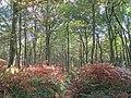 Path through Wellington Wood - geograph.org.uk - 2196826.jpg