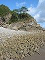 Pebble beach at low tide - geograph.org.uk - 565453.jpg