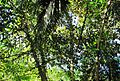 Pepohonan di semak belukar (16).JPG