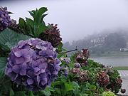 Petrópolis - Cidade das Hortências e do Russo - Nevoeiro.jpg