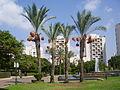 PikiWiki Israel 24405 Palm Trees in Merom Naveh park Ramat Gan.JPG