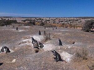 Puerto Madryn - Image: Pingüinera en Puerto Madryn
