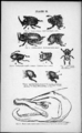 Plate II - figure 11 to 16 - Descent of man - Charles Darwin.png