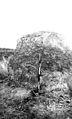 Pleistocene deposits of the Thames valley. Wellcome M0014954.jpg