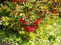 Poltava Botanical garden (102).jpg