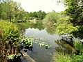 Pond, Botanischer Garten München-Nymphenburg - DSC07708.JPG
