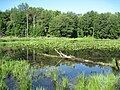 Pond on Coe Road (3) - panoramio.jpg
