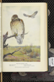 Portraits and Habits of Our Birds-1 0067-scan.png