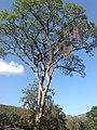 Posse, Teresópolis - RJ, Brazil - panoramio (39).jpg