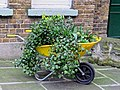 Postman's Park wheelbarrow planter, City of London, England.jpg