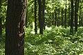 Praha, Kunratice, les.jpg