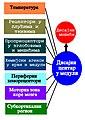 Primarni faktori regulacije disanja 3.jpg