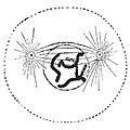 Prometaphase 1.jpg